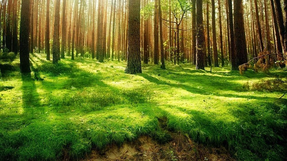 лес лесное хозяйство