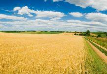 сельское хозяйство агропромышленность поле пшеница