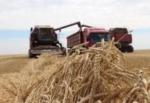 урожай зерно поле комбайн