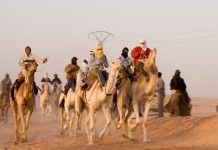 Алжир Африка верблюд