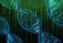 геном днк