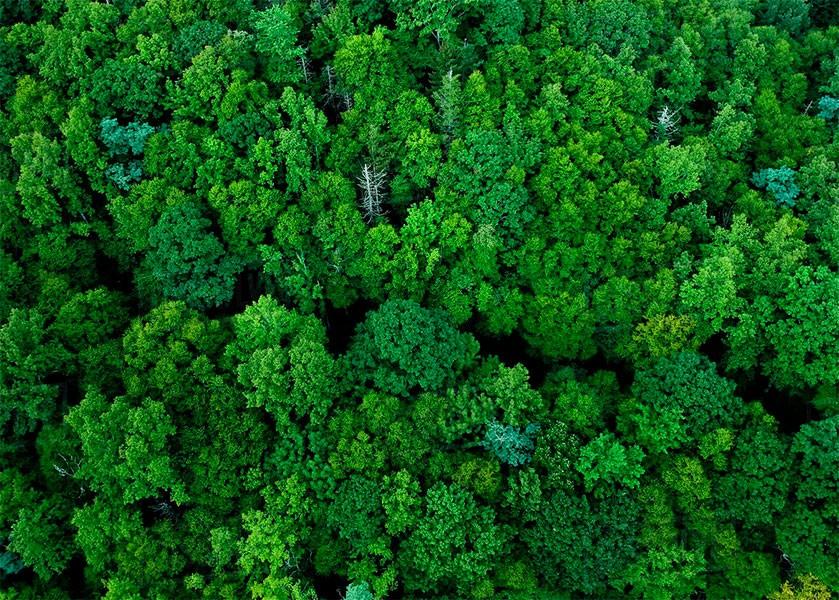 В Сколтехе разработан метод распознавания пород деревьев на космических снимках лесов