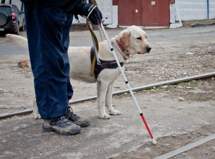 Собака проводник поводырь